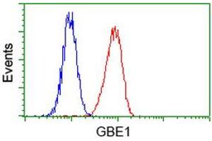 Image no. 2 for anti-Glucan (1,4-alpha-), Branching Enzyme 1 (GBE1) antibody (ABIN1498395)