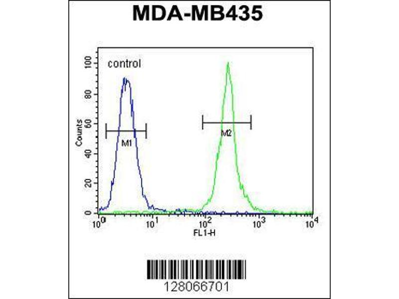 Flow Cytometry (FACS) image for anti-Mitochondrial RRNA Methyltransferase 1 Homolog (S. Cerevisiae) (MRM1) (AA 80-109), (N-Term) antibody (ABIN654341)