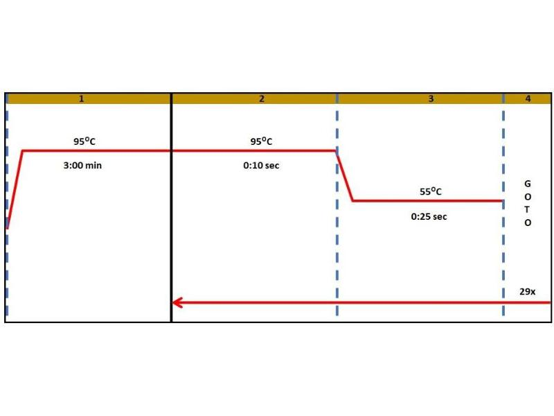 Platelet Derived Growth Factor BB (PDGFBB) ELISA Kit (3)