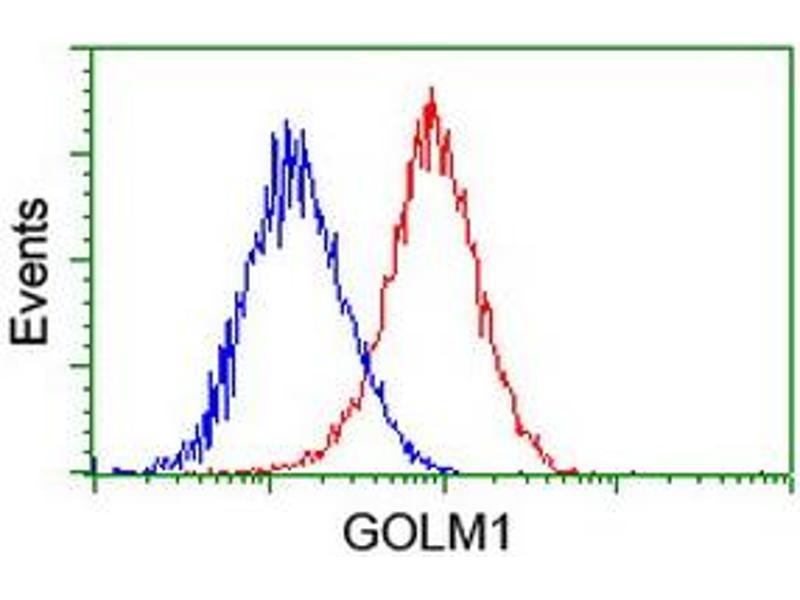 Image no. 7 for anti-Golgi Membrane Protein 1 (GOLM1) antibody (ABIN1498491)