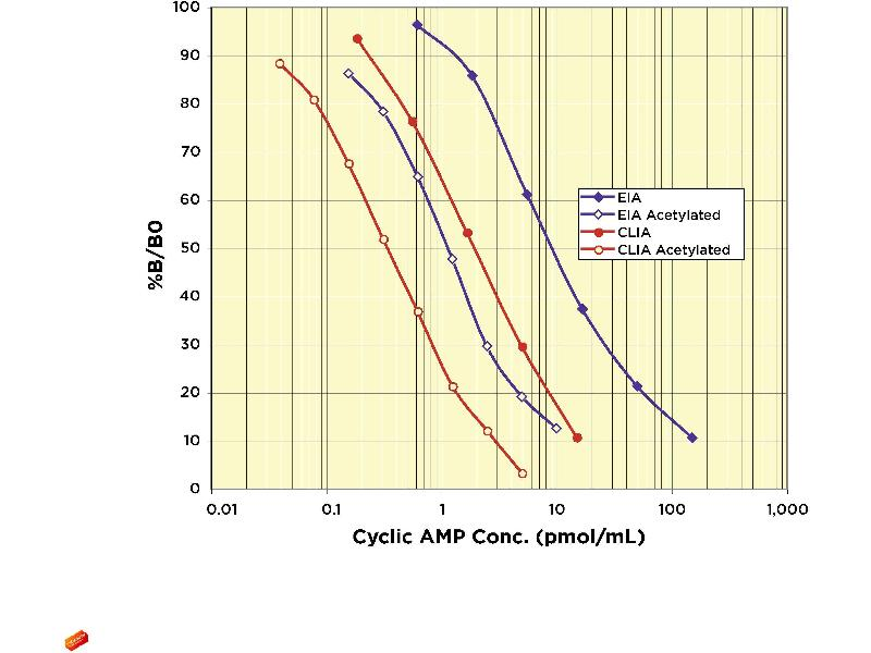 image for cAMP ELISA 试剂盒 (Cyclic Adenosine Monophosphate) (ABIN577668)