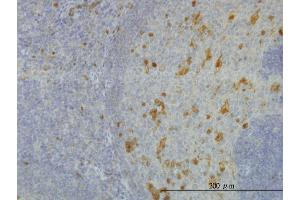Image no. 1 for anti-Aldo-Keto Reductase Family 1, Member A1 (Aldehyde Reductase) (AKR1A1) (AA 1-325) antibody (ABIN564487)