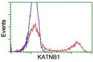 Flow Cytometry (FACS) image for anti-Katanin P80 (WD Repeat Containing) Subunit B 1 (KATNB1) antibody (ABIN2723985)
