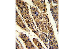 Image no. 1 for anti-Tumor Protein, Translationally-Controlled 1 (TPT1) antibody (ABIN3003778)