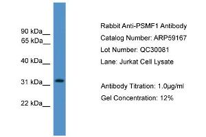 Image no. 1 for anti-Proteasome (Prosome, Macropain) Inhibitor Subunit 1 (PI31) (PSMF1) (Middle Region) antibody (ABIN2787963)