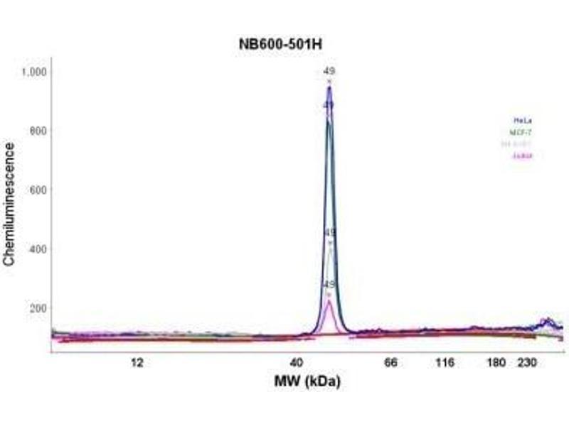 Simple Western (SimWes) image for anti-beta Actin antibody (Actin, beta) (N-Term) (ABIN153386)