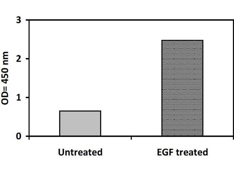 image for V-Erb-B2 Erythroblastic Leukemia Viral Oncogene Homolog 3 (Avian) (ERBB3) ELISA Kit (ABIN1981720)