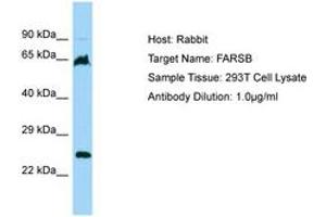 Image no. 1 for anti-Phenylalanyl-tRNA Synthetase, beta Subunit (FARSB) (AA 22-71) antibody (ABIN6750197)