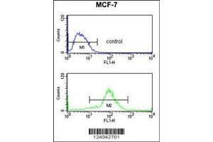 anti-MOB Kinase Activator 2 (MOB2) (AA 5-32), (N-Term) antibody (3)