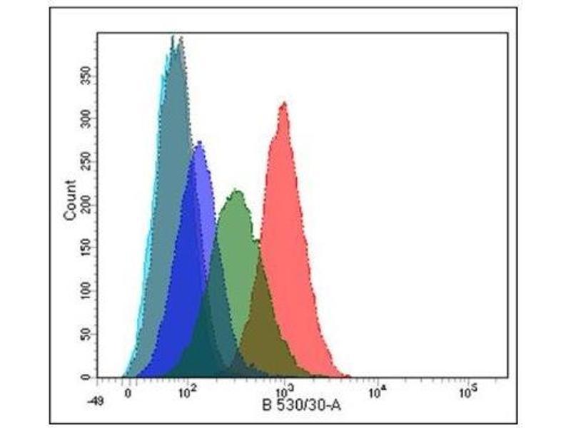 Flow Cytometry (FACS) image for anti-phospholipase A2 Receptor 1, 180kDa (PLA2R1) (N-Term) antibody (ABIN4345963)