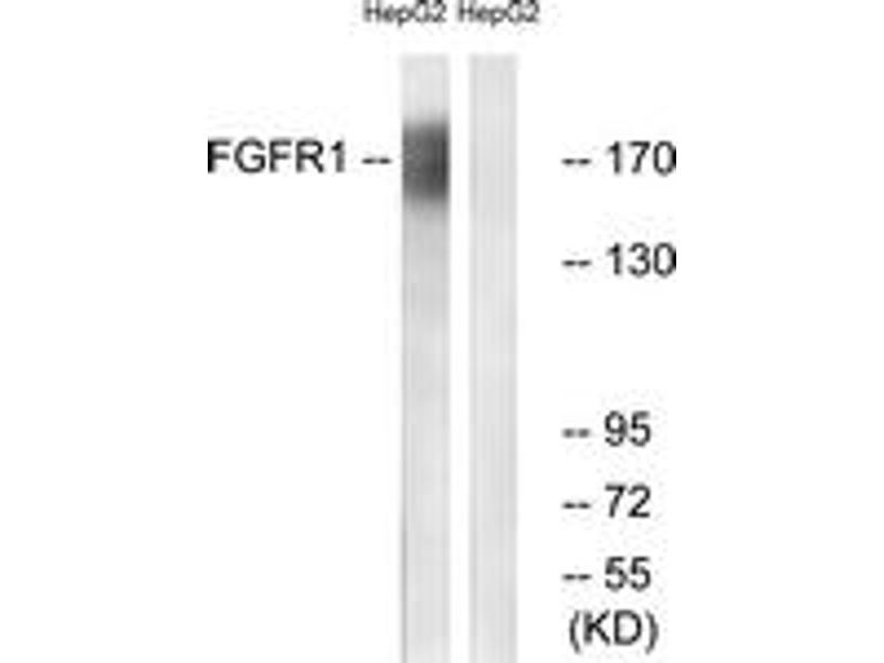 Western Blotting (WB) image for anti-Fibroblast Growth Factor Receptor 1 (FGFR1) (AA 736-785) antibody (ABIN1532336)