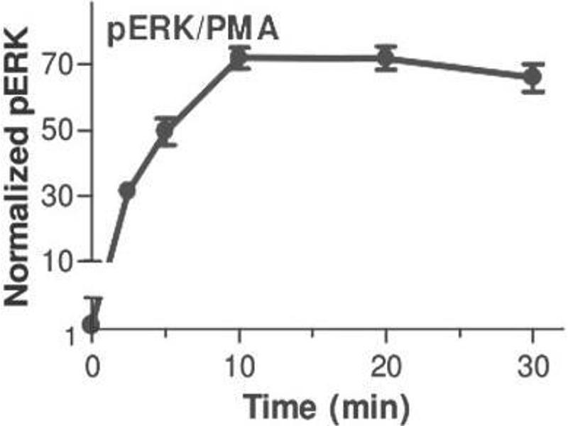 Mitogen-Activated Protein Kinase 1 (MAPK1) ELISA Kit