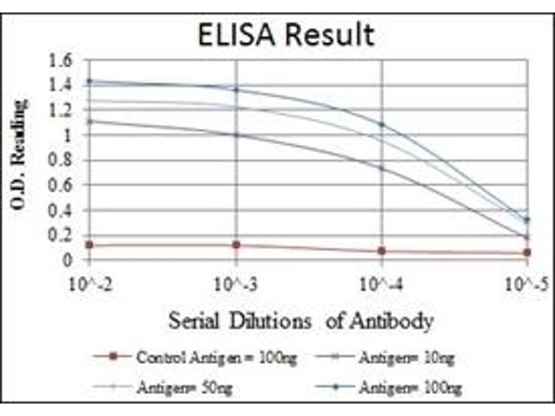 ELISA image for anti-Activating Transcription Factor 2 (ATF2) antibody (ABIN1105459)