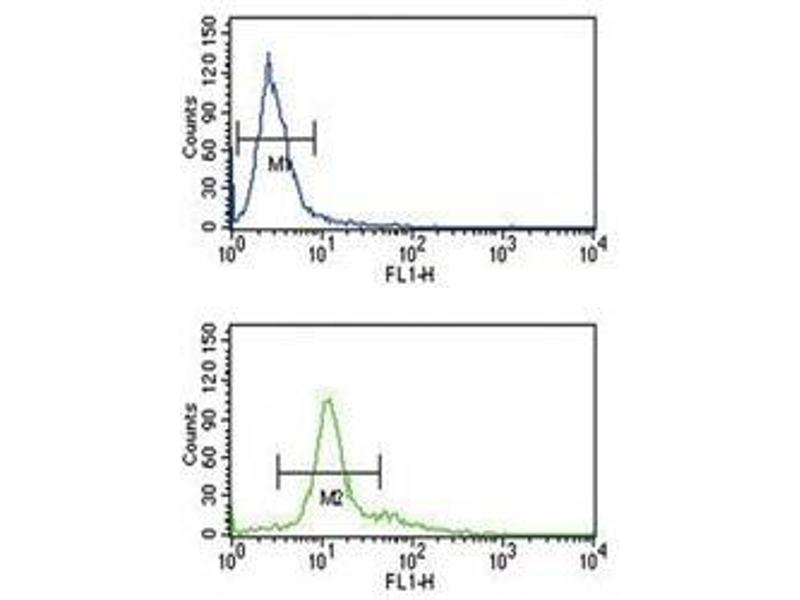 Flow Cytometry (FACS) image for anti-Proprotein Convertase Subtilisin/kexin Type 2 (PCSK2) (AA 318-346) antibody (ABIN3032333)