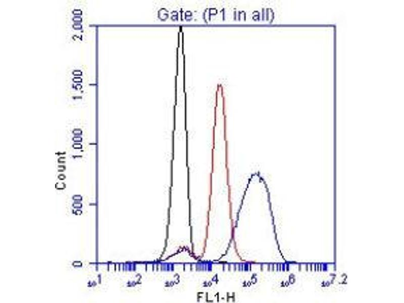 Flow Cytometry (FACS) image for anti-ZAP70 antibody (zeta-Chain (TCR) Associated Protein Kinase 70kDa) (Tyr319) (ABIN438732)