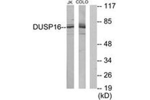 Image no. 1 for anti-Dual Specificity Phosphatase 16 (DUSP16) (AA 571-620) antibody (ABIN1534102)