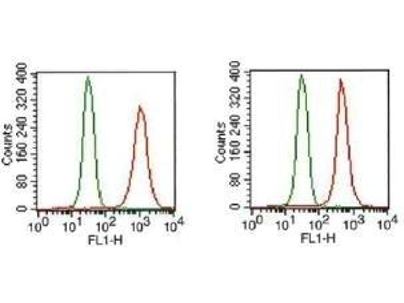 Flow Cytometry (FACS) image for anti-Fibroblast Growth Factor Receptor 1 (FGFR1) (Isoform alpha), (Isoform beta) antibody (ABIN250617)