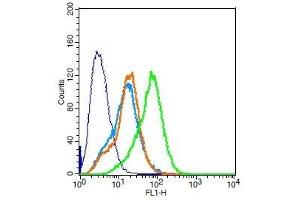 Flow Cytometry (FACS) image for anti-EPH Receptor A3 (EPHA3) (AA 430-465) antibody (ABIN721975)