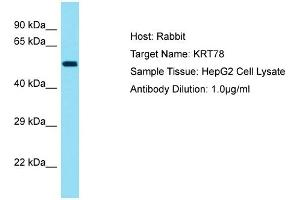 Image no. 1 for anti-Keratin 78 (KRT78) (Middle Region) antibody (ABIN2791631)