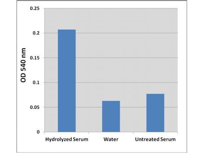 Biochemical Assay (BCA) image for Hydroxyproline Assay Kit (ABIN5067614)