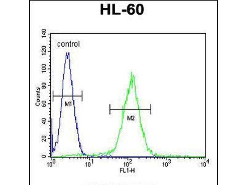 Image no. 2 for anti-Olfactory Receptor, Family 10, Subfamily J, Member 5 (OR10J5) (AA 243-270), (C-Term) antibody (ABIN5536704)