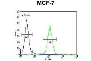 anti-Upstream Transcription Factor 1 (USF1) (AA 174-201), (Middle Region) antibody