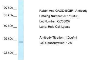 Image no. 1 for anti-Growth Arrest and DNA-Damage-Inducible, gamma Interacting Protein 1 (GADD45GIP1) (Middle Region) antibody (ABIN2789108)