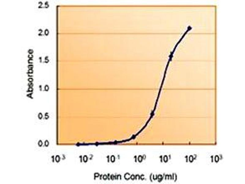 image for anti-Glucose-6-Phosphate Dehydrogenase (G6PD) antibody (ABIN547941)