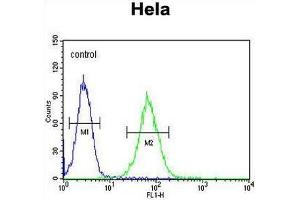 Image no. 1 for anti-SET and MYND Domain Containing 1 (SMYD1) (AA 420-449), (C-Term) antibody (ABIN954865)