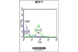 Flow Cytometry (FACS) image for anti-WD Repeat Domain 37 (WDR37) (AA 426-455), (C-Term) antibody (ABIN653198)