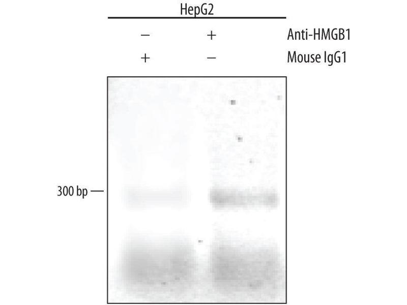 Chromatin Immunoprecipitation (ChIP) image for anti-HMGB1 antibody (High-Mobility Group Box 1) (AA 2-215) (ABIN4899428)