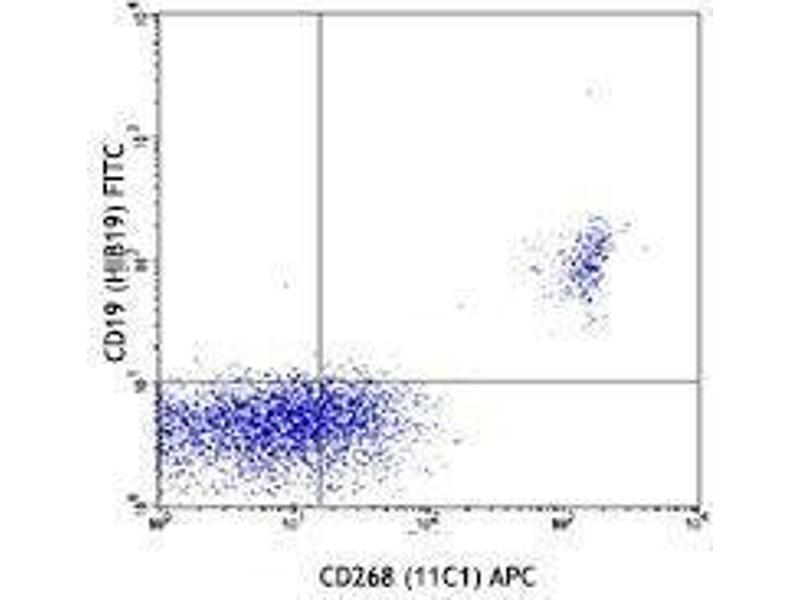 Flow Cytometry (FACS) image for anti-Tumor Necrosis Factor Receptor Superfamily, Member 13C (TNFRSF13C) antibody (APC) (ABIN2658145)
