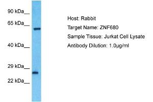 Image no. 1 for anti-Zinc Finger Protein 680 (ZNF680) (Middle Region) antibody (ABIN2774591)
