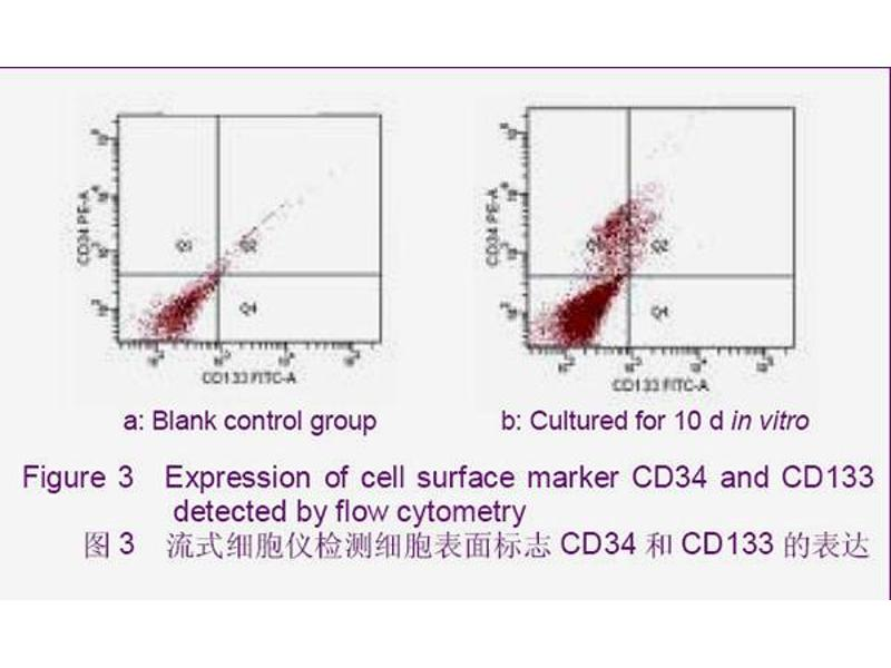 Flow Cytometry (FACS) image for anti-CD34 Molecule (CD34) (AA 240-280) antibody (ABIN676898)