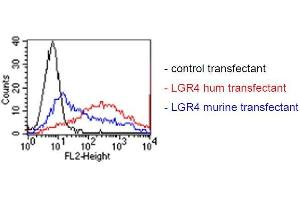 Image no. 2 for anti-Leucine-Rich Repeat Containing G Protein-Coupled Receptor 4 (LGR4) antibody (ABIN1381741)
