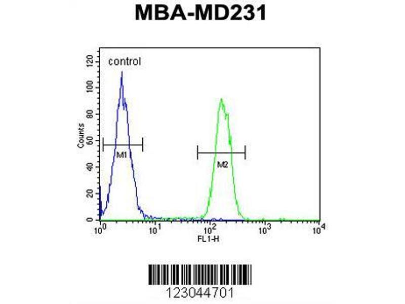 Flow Cytometry (FACS) image for anti-Arginase, Liver (ARG1) (AA 293-322), (Arg1), (C-Term) antibody (ABIN652925)