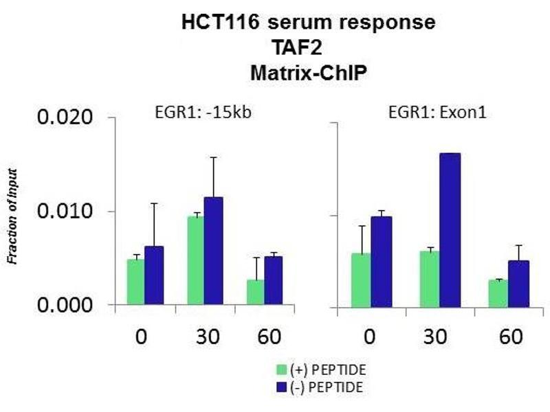 Chromatin Immunoprecipitation (ChIP) image for anti-TAF2 抗体 (TAF2 RNA Polymerase II, TATA Box Binding Protein (TBP)-Associated Factor, 150kDa) (Middle Region) (ABIN2777909)