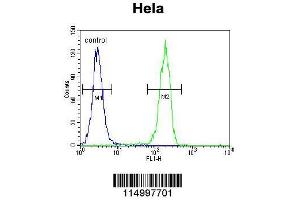 Flow Cytometry (FACS) image for anti-Cyclin G1 antibody (CCNG1) (AA 243-272) (ABIN655159)
