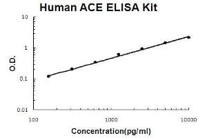 Image no. 1 for Angiotensin I Converting Enzyme (Peptidyl-Dipeptidase A) 1 (ACE) ELISA Kit (ABIN411373)