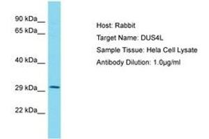 Image no. 1 for anti-Dihydrouridine Synthase 4-Like (S. Cerevisiae) (DUS4L) (AA 38-87) antibody (ABIN6750560)