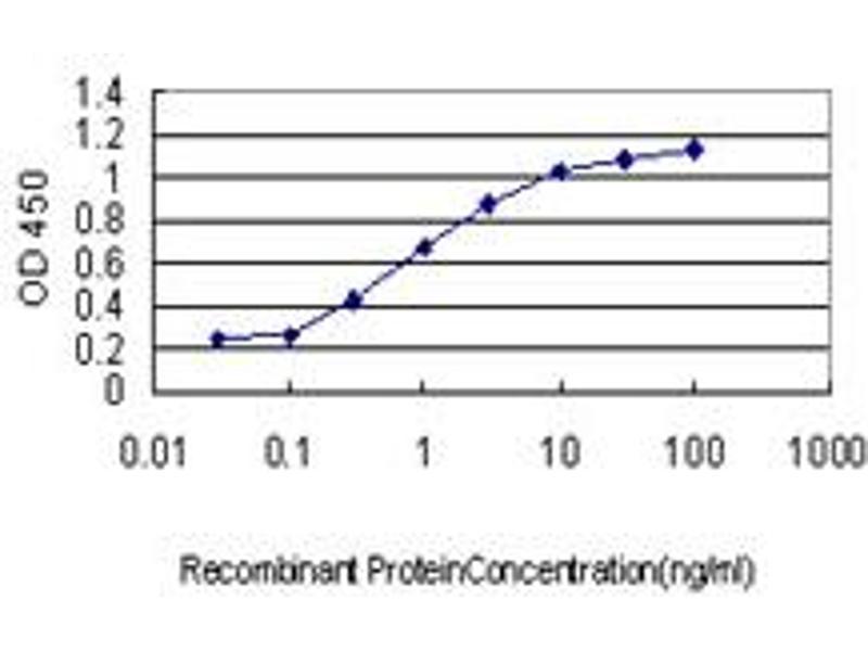 Image no. 1 for anti-Dual-Specificity tyrosine-(Y)-phosphorylation Regulated Kinase 1A (DYRK1A) (AA 674-763) antibody (ABIN560675)