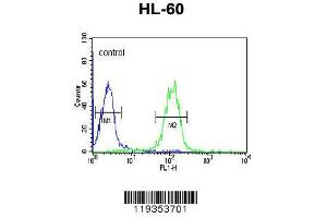 Flow Cytometry (FACS) image for anti-Granzyme B (GZMB) (AA 175-203), (C-Term) antibody (ABIN390496)