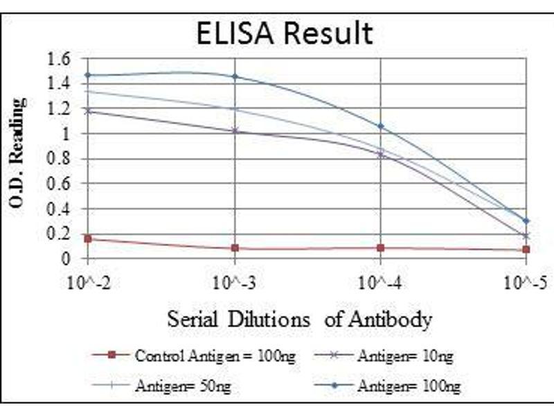 ELISA image for anti-Glucokinase (Hexokinase 4) (GCK) antibody (ABIN4880309)