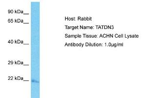 Image no. 1 for anti-TatD DNase Domain Containing 3 (TATDN3) (C-Term) antibody (ABIN2791929)