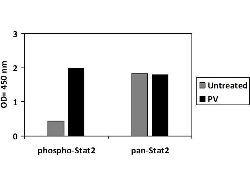 Signal Transducer and Activator of Transcription 2, 113kDa (STAT2) ELISA Kit (2)