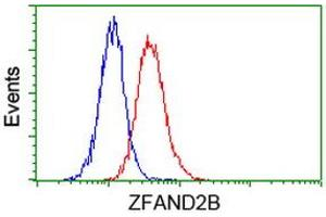 Image no. 3 for anti-Zinc Finger, AN1-Type Domain 2B (ZFAND2B) antibody (ABIN1501806)