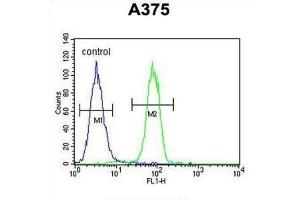 Image no. 2 for anti-Endothelin-Converting Enzyme 1 (ECE1) antibody (ABIN3002833)