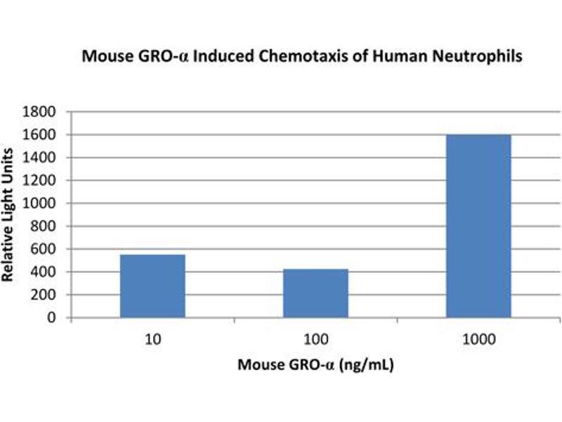 Image no. 1 for Chemokine (C-X-C Motif) Ligand 1 (Melanoma Growth Stimulating Activity, Alpha) (CXCL1) protein (ABIN6699668)