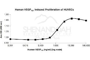 image for Vascular Endothelial Growth Factor 121 (Active) protein (ABIN4889934)