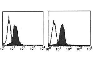 Flow Cytometry (FACS) image for anti-MHC Class I Polypeptide-Related Sequence A (MICA) antibody (ABIN1108243)